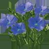 Необычные цветки